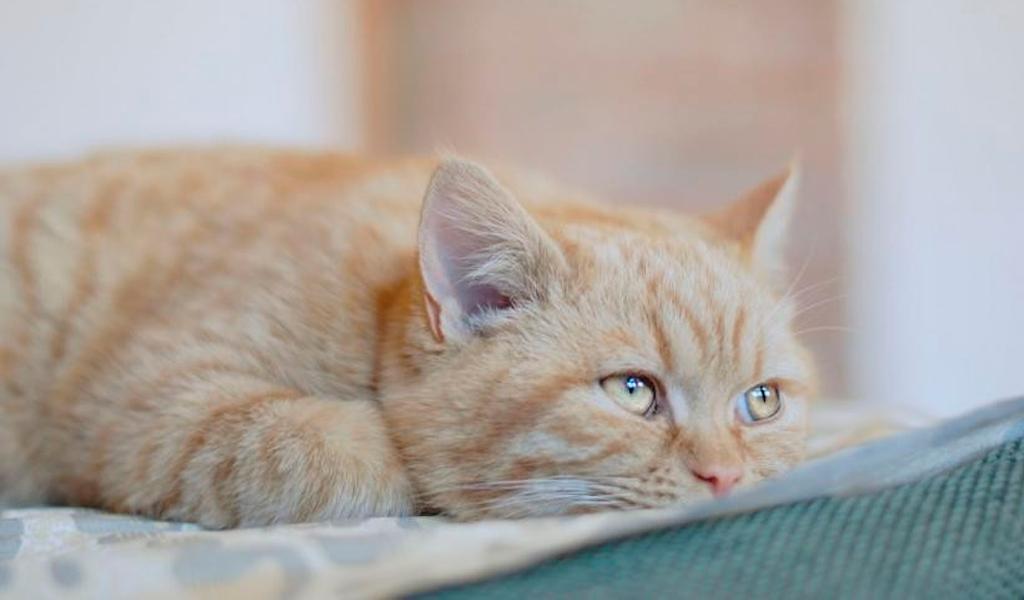 Los gatos reconocen su propio nombre