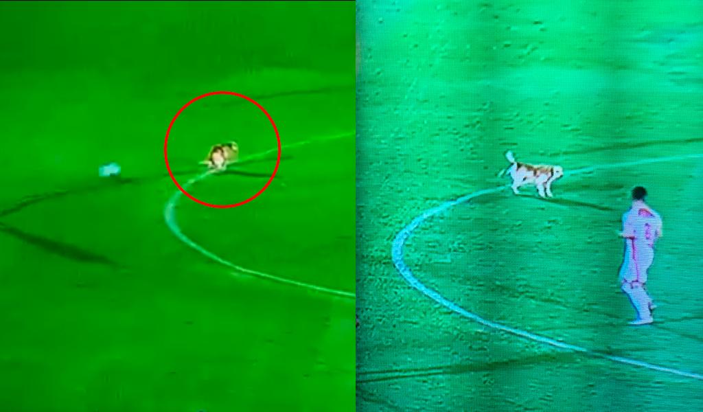 Perro interrumpió un partido de la Liga Águila 2019 II