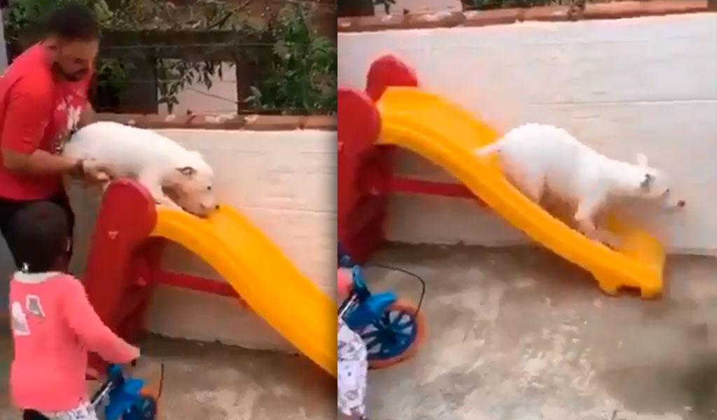 Perro juega en tobogán para niños