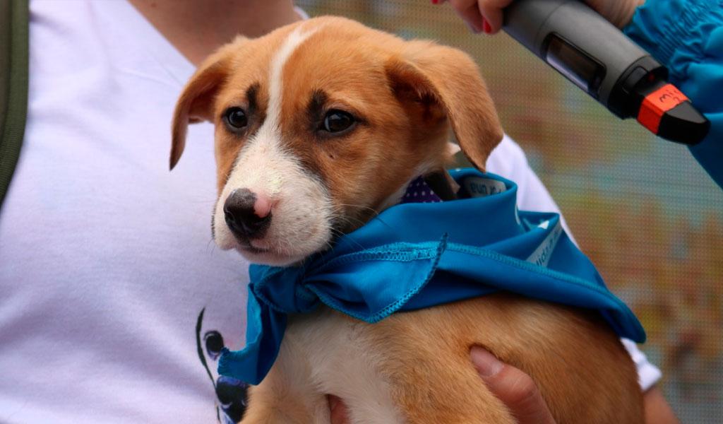 ¿Cuántos perros y gatos adoptaron en la Feria Zoolidaria?