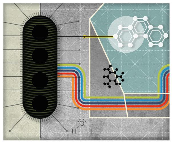 Existe 'planeta eléctrico' y fue cableado con bacterias