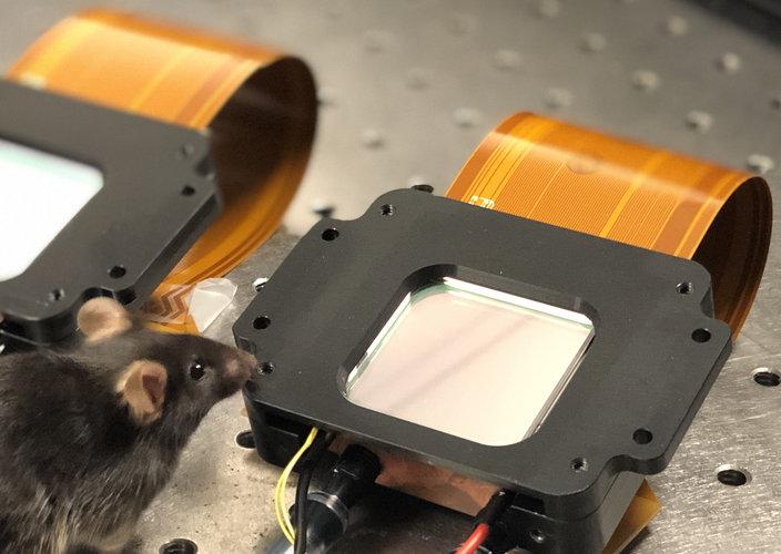 Usan láseres en ratones para asomarse a la mente