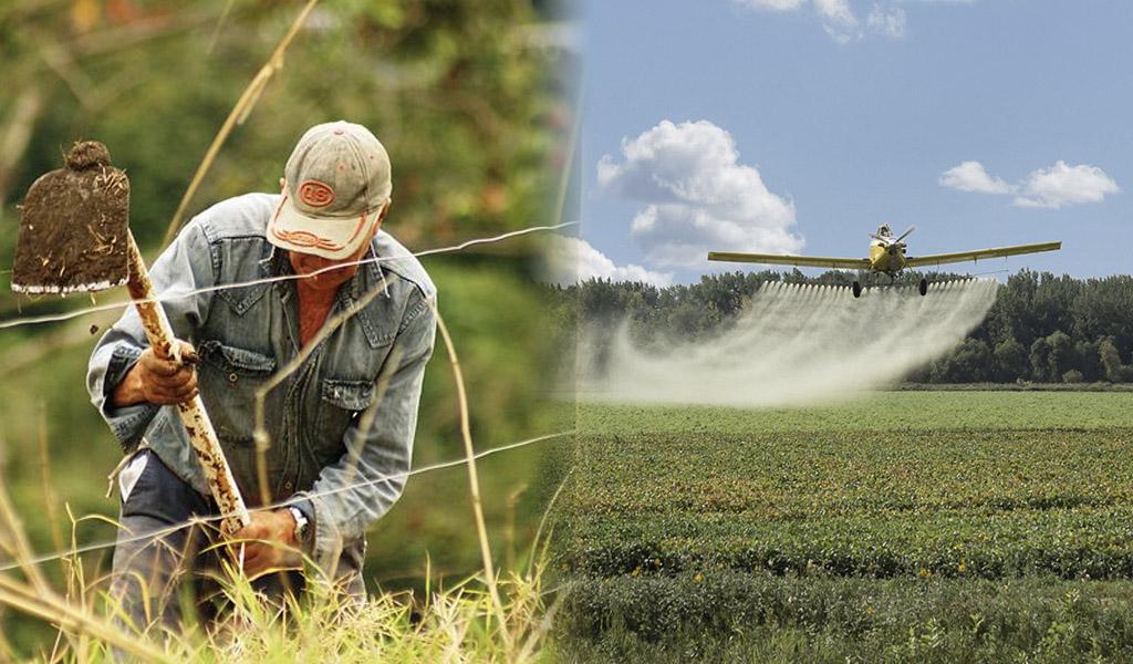 Cultivadores de coca protestarán contra el glifosato