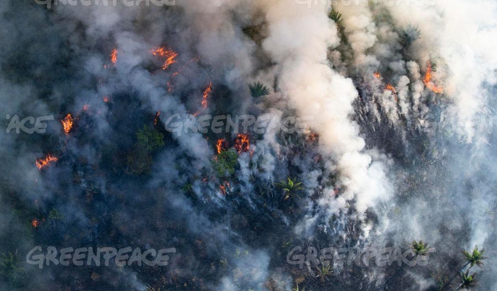 amazonas en llamas, greenpeace