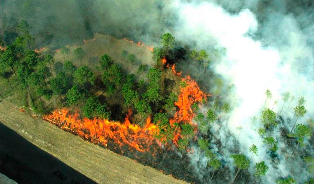 Amazonas: tres semanas bajo el fuego