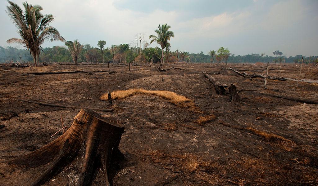 Con al aval del Papa denunciaron a Brasil por Amazonía
