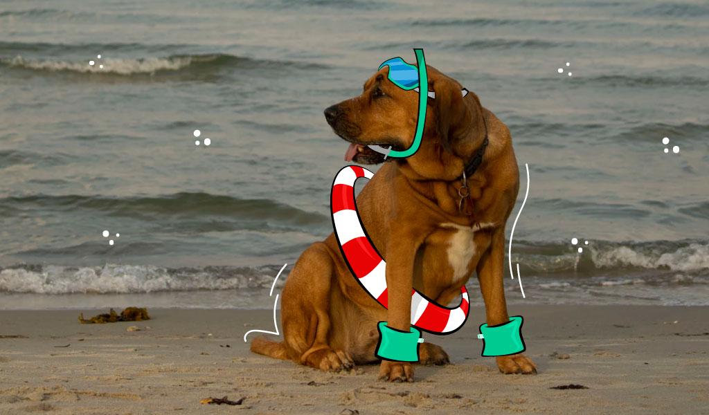 ¿Cuáles son las razas de perros que no pueden nadar?