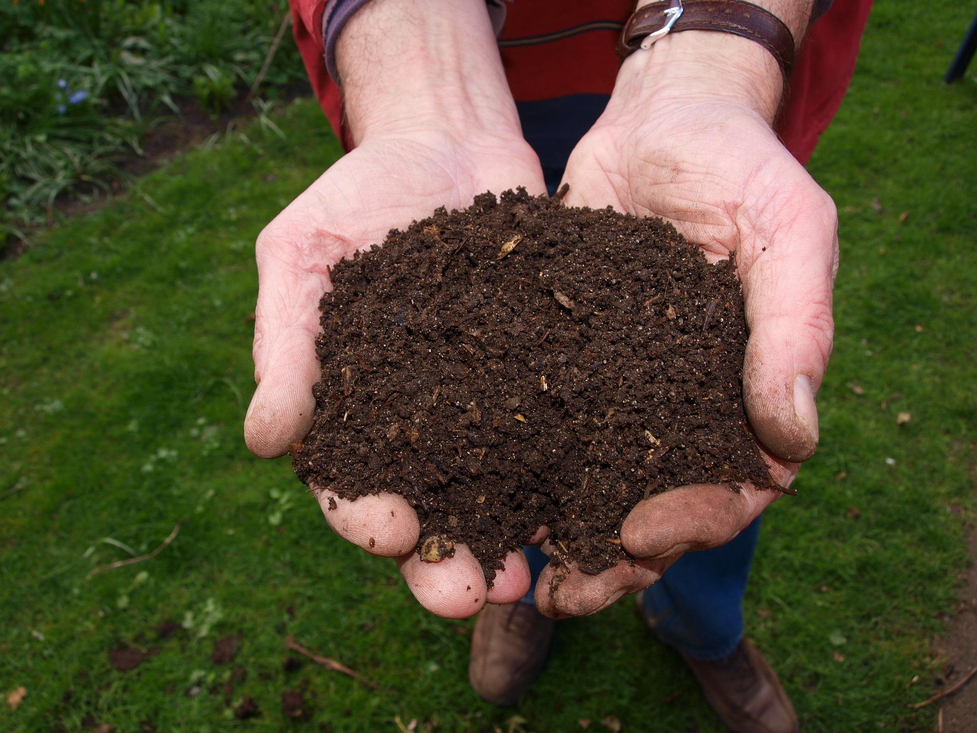 En el Valle crean abono para erradicar hongo Fusarium