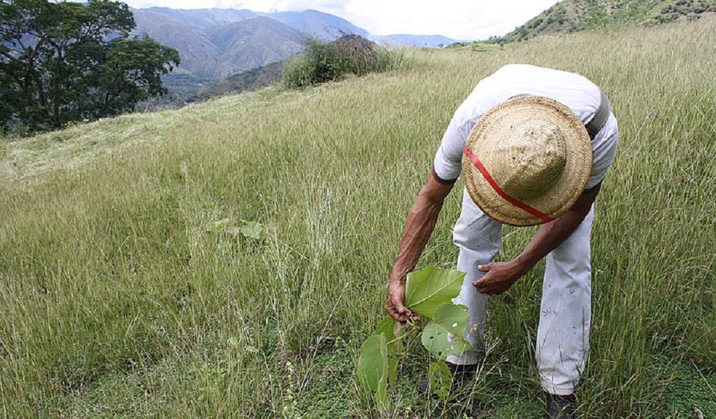 recursos, ambientales, campesinos, Farc, parques naturales