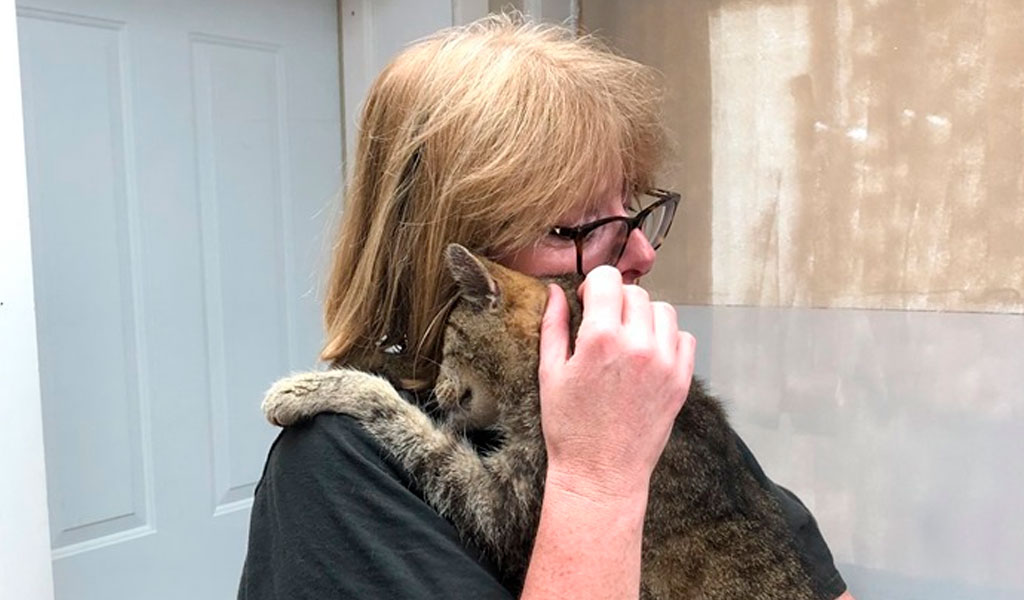 Gato fue hallado después de 11 años desaparecido