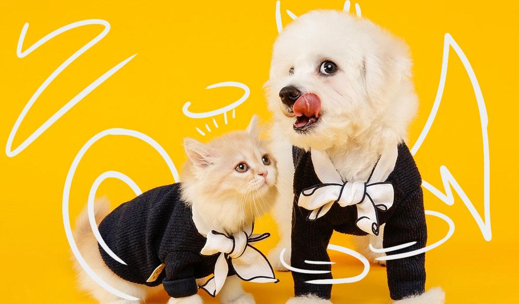 Los gatos son mas cariñosos que los perros según estudio
