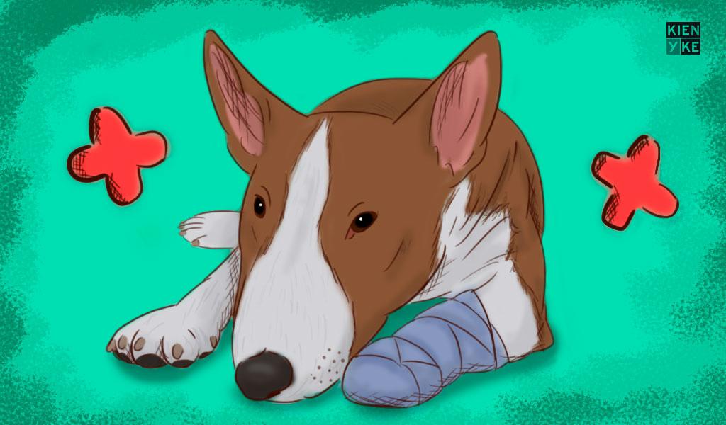 Lo que debe saber de las pólizas para perros