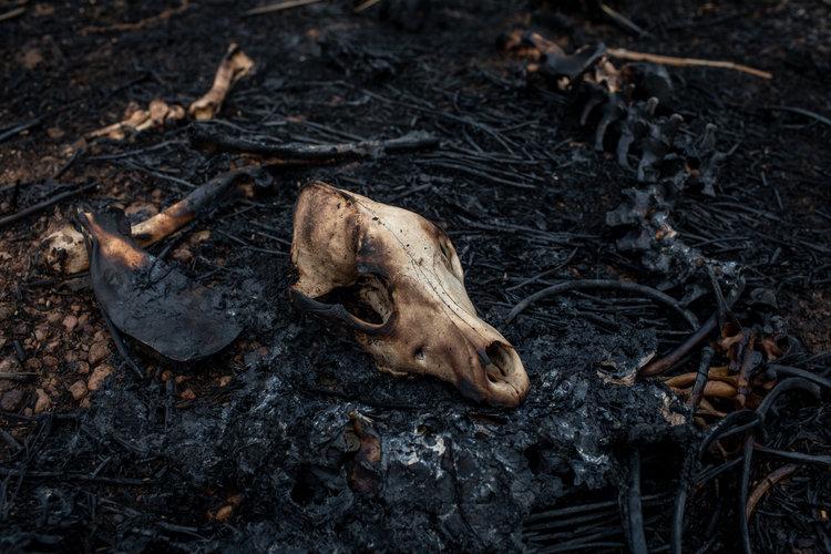 La Tierra se calienta y arden los bosques del mundo