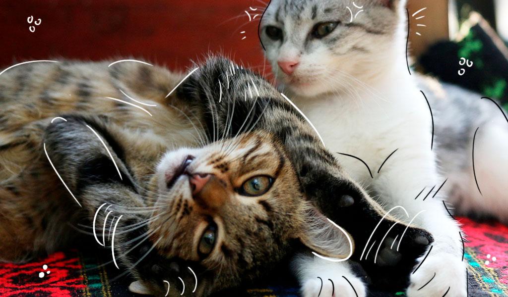 ¿Cómo incorporar un nuevo gato a la familia?