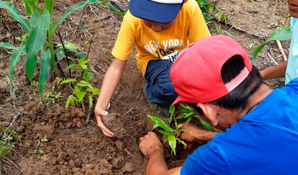 PNUD- Bosque seco tropical