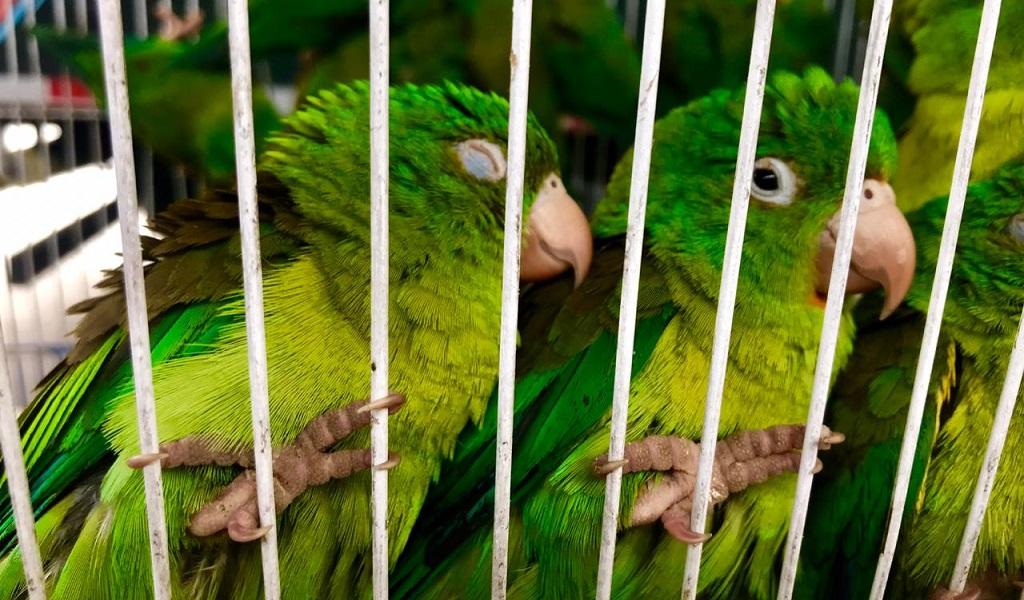 Bogotá, rescate, terminal, maltrato animal, aves, loros bronceados