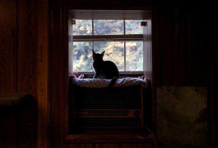 El parásito felino que acaba con las nutrias