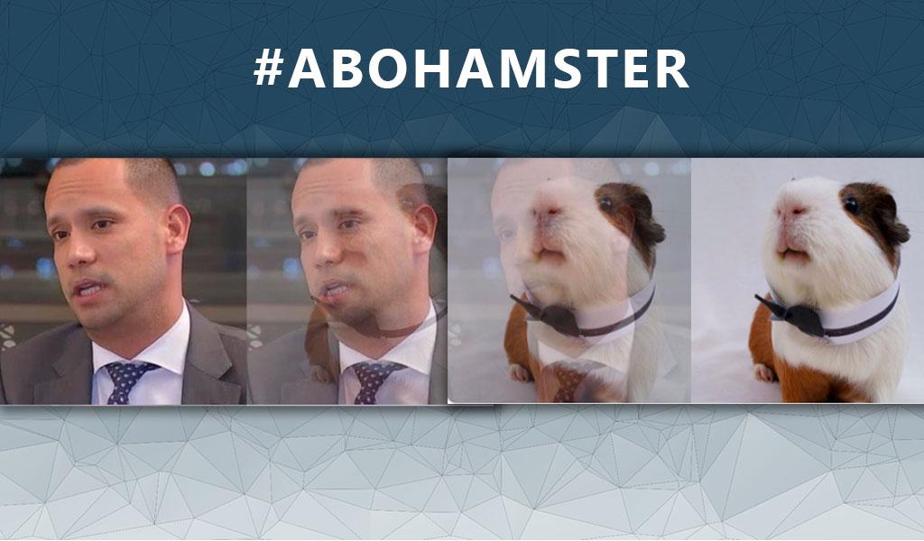 Los memes del #Abohámster, boom en redes sociales