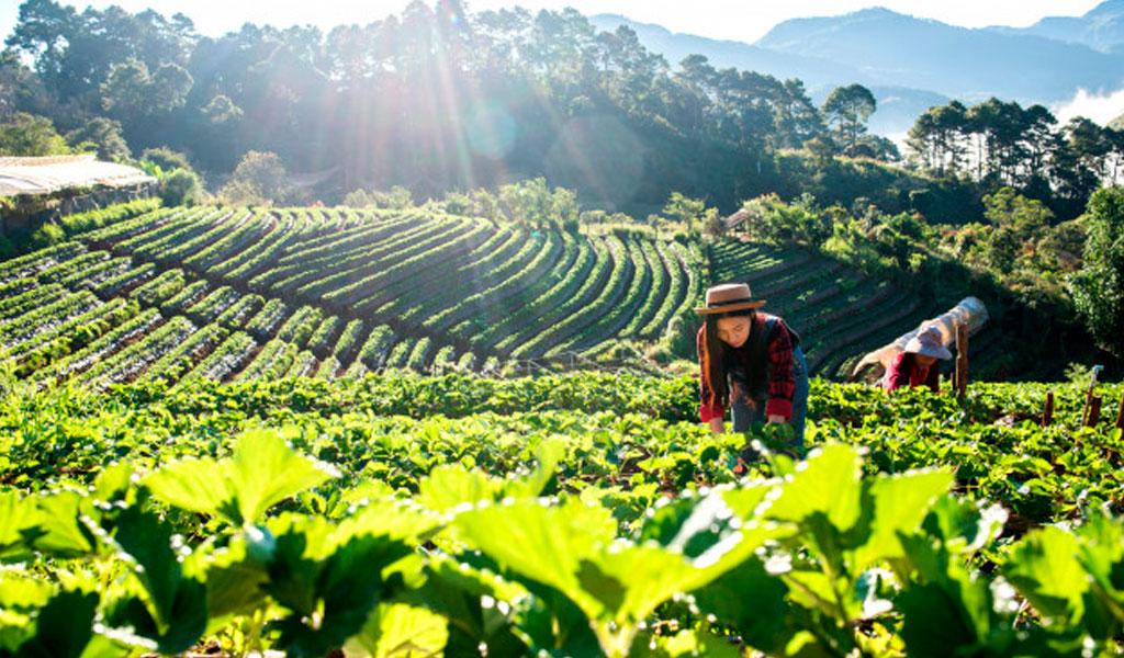 Agricultura natural contribuye a reducir cambio climático
