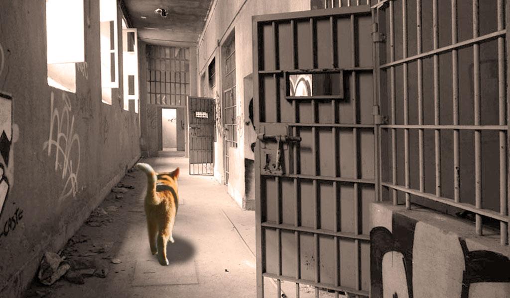 Escapa gato sospechoso de tráfico de droga