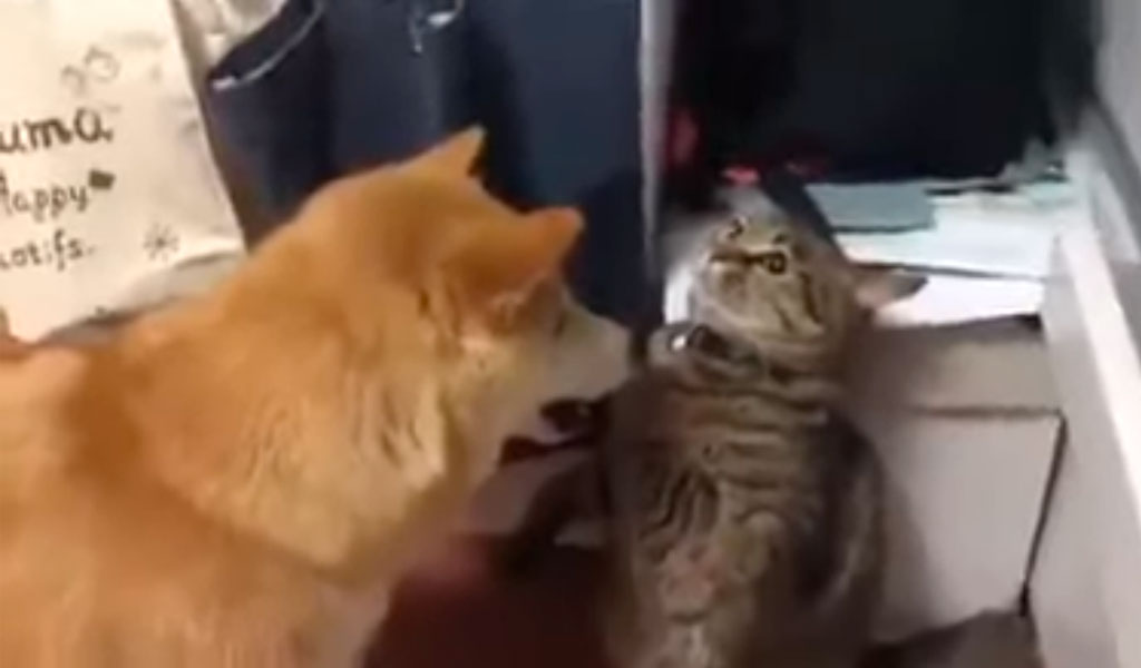 Gato finge ser estatua para golpear a un perro