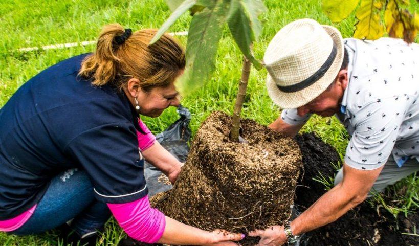 En Bogotá van más de 398.000 árboles plantados
