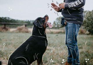 Consecuencias de gritar a su mascota