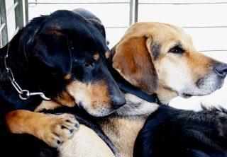 Distrito crea nueva campaña para ayudar perros callejeros
