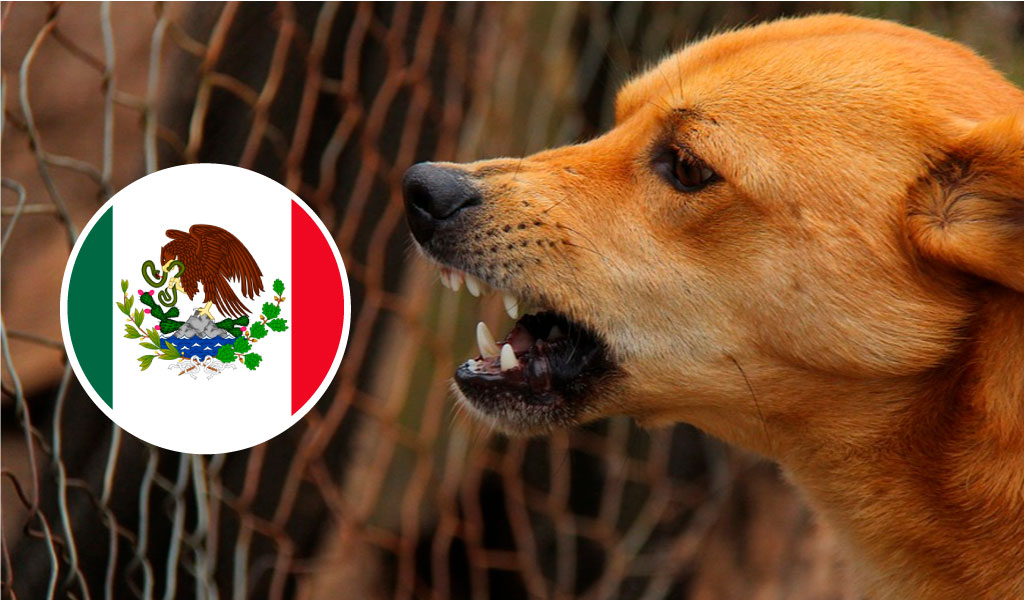 México es declarado el primer país libre de rabia canina