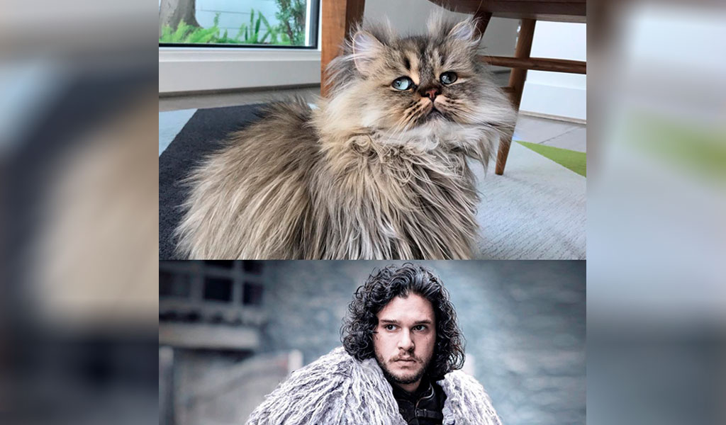 Gato triste sorprende por su parecido con Jon Snow