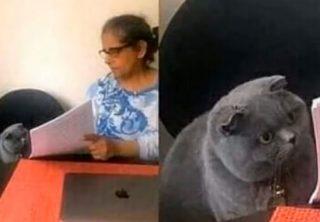 Conozca el origen sobre el meme del gato regañado