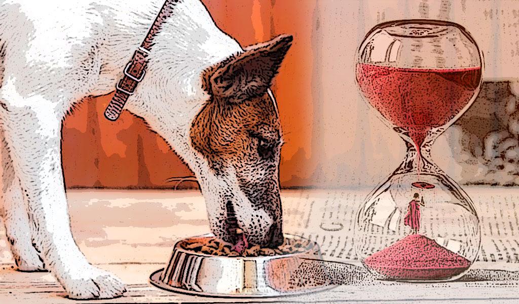 Alimentación de las mascotas según su edad