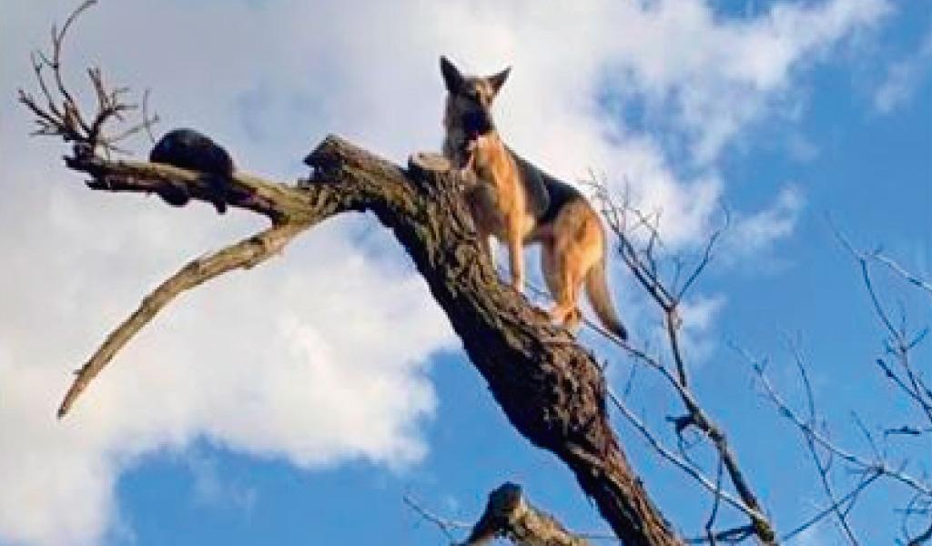 Perro quedó atrapado en árbol por perseguir a un gato