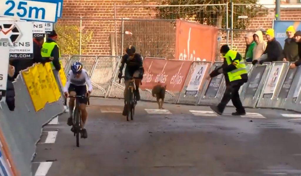 Perro interrumpe carrera de ciclismo y causa risas