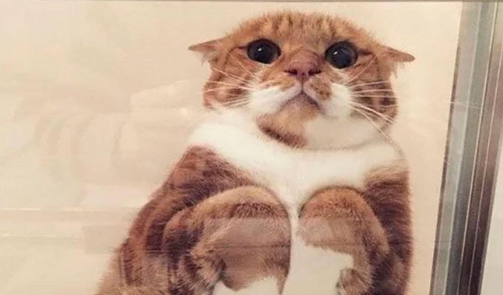 Gatos sobre vidrios: un hilo que enterneció a Twitter