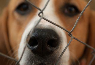 Lanzan grupo especial para judicializar casos de maltrato animal