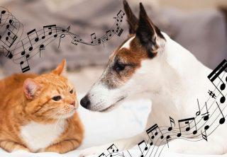 Spotify crea listas musicales para las mascotas