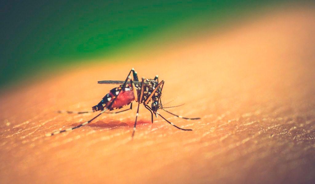 Alerta amarilla en Valle del Cauca por aumento en casos de Dengue
