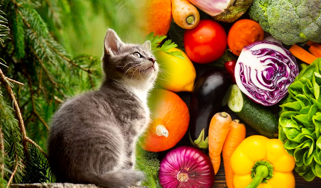 ¿Por qué no es sana una dieta vegetariana para un gato?
