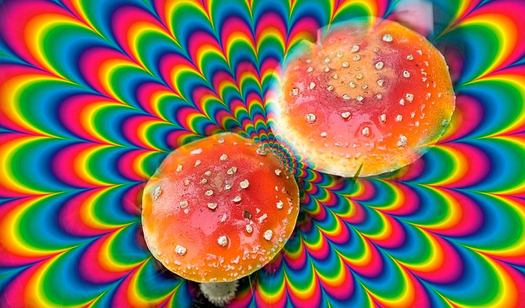Hongos alucinógenos serían buenos para la salud