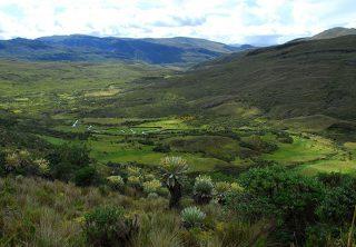 Fuentes hídricas del páramo de Pisba estarían en riesgo