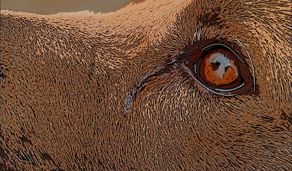 ¿Qué produce el lagrimeo en el perro?