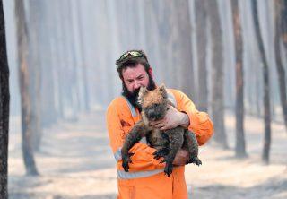 Animales en peligro de extinción por incendios en Australia