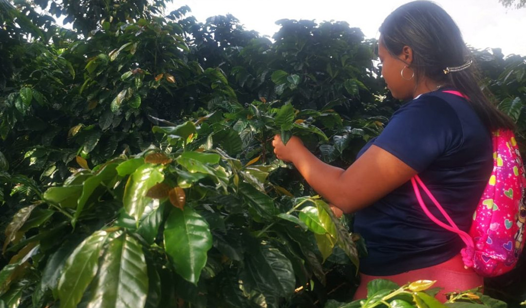 Mujeres excombatientes transforman su vida con el café