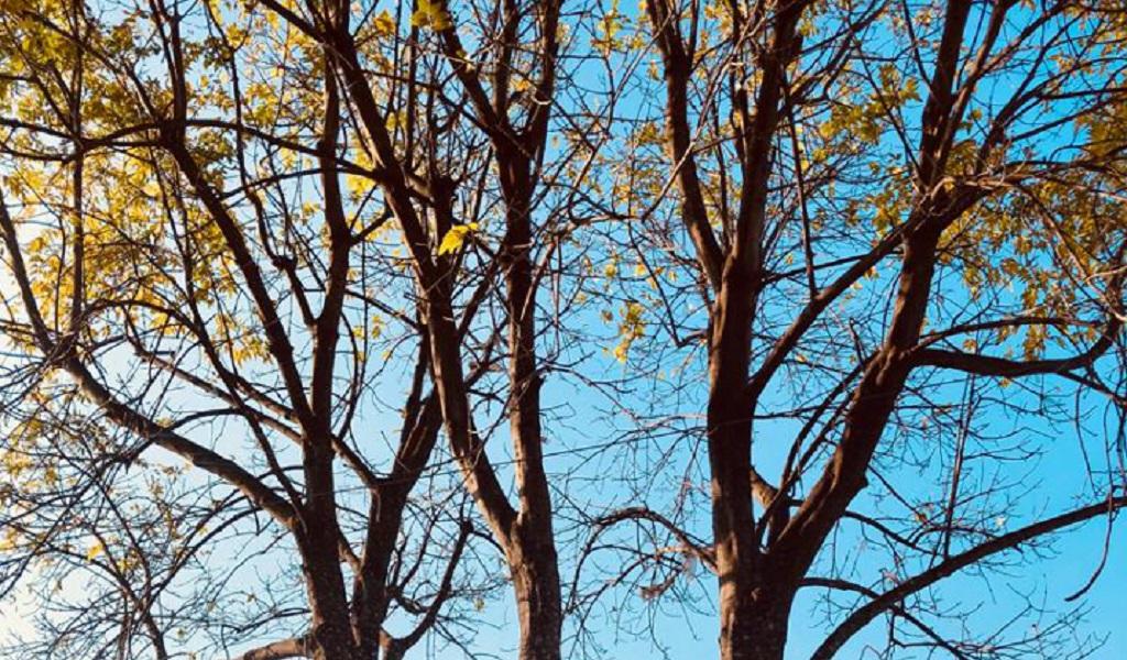 Vivir sin miedo a morir: reflexiones en torno a la muerte