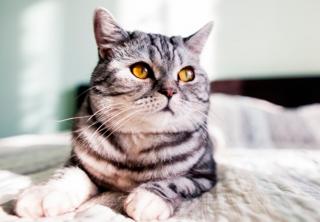 Día Internacional del gato: los lujos de estas mascotas