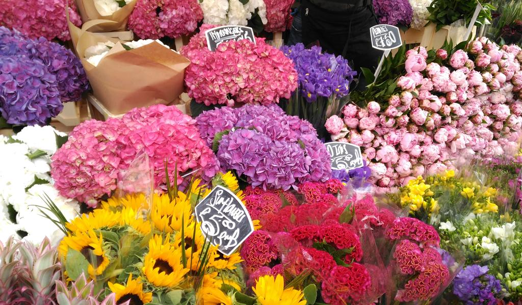 Exportación de flores colombianas para San Valentín