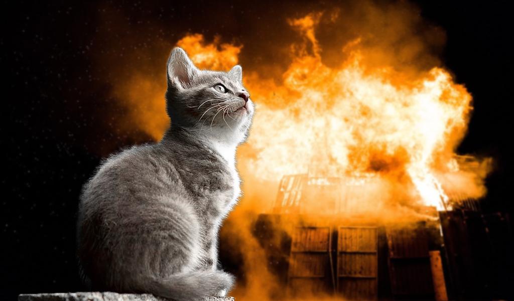 Incendio, Rusia, mujer, salva, gato