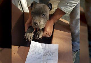 Niño dejó en adopción a su perro por maltrato